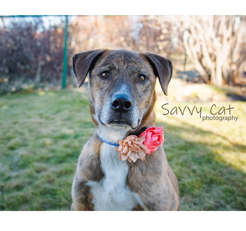 Mavi Adopted Into A Forever Home Misty Creek Dog Rescue