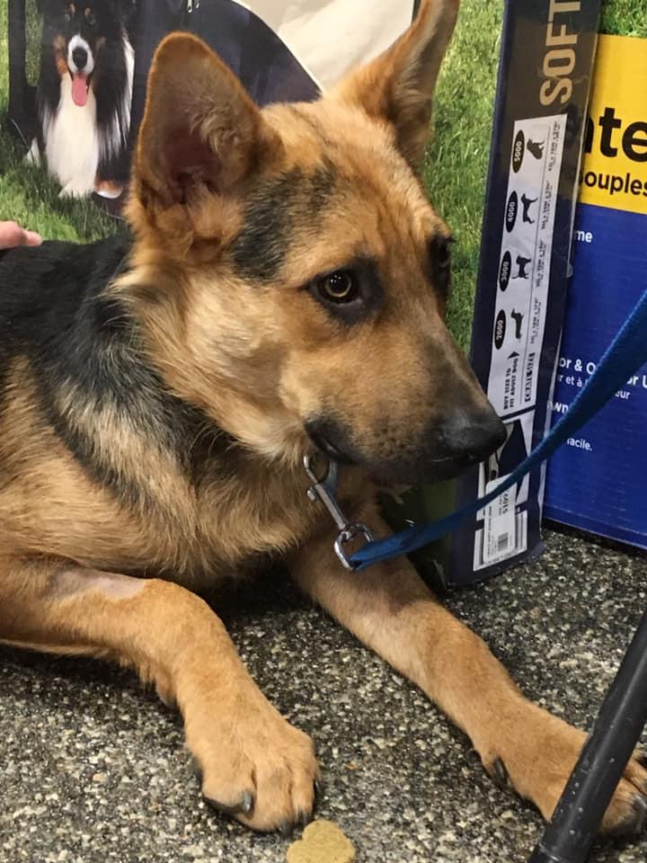 Bronto Misty Creek Dog Rescue