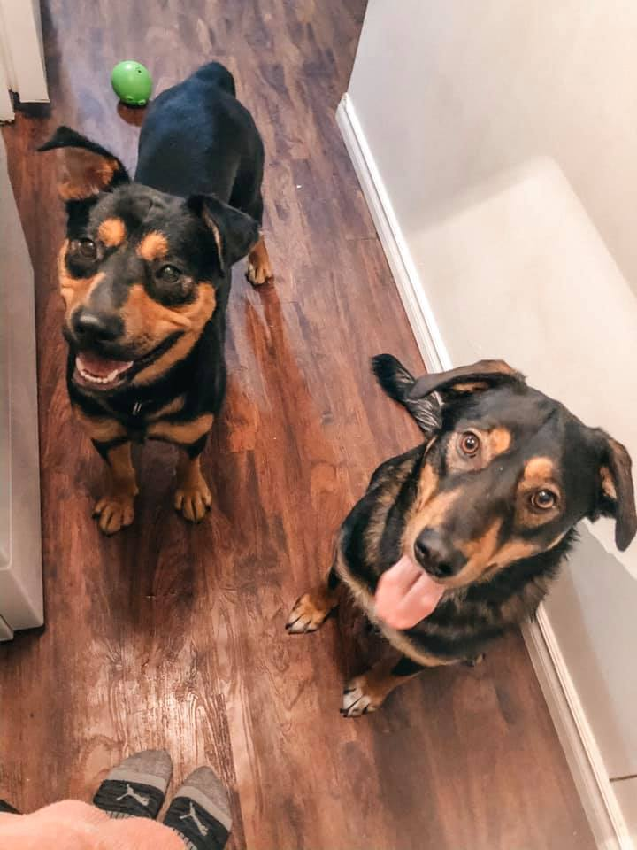 Happy Tails – Misty Creek Dog Rescue